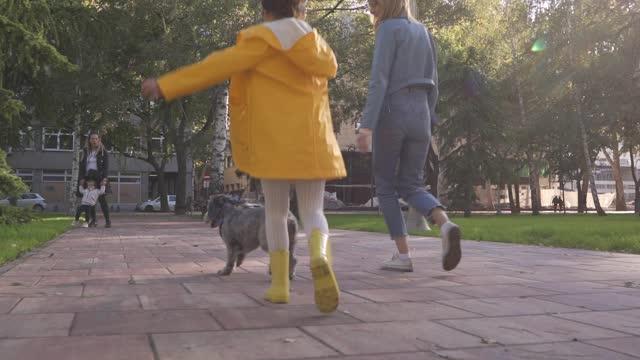 härlig syster som går tillsammans sin söta grå pudel i koppel under färsk höstdag - sinnesrörelse bildbanksvideor och videomaterial från bakom kulisserna