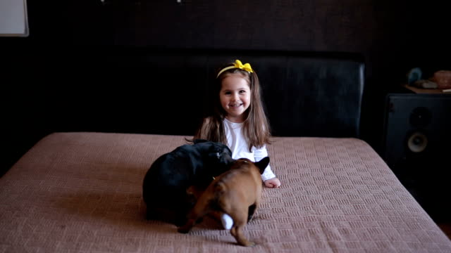 lovely toddler in bed with french bulldogs - canine stock videos & royalty-free footage