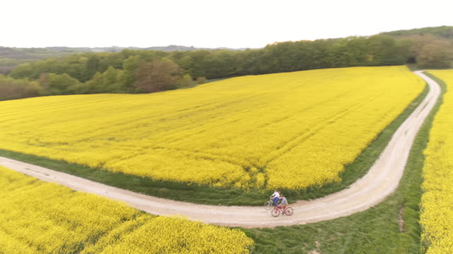 AERIAL Loving couple holding hands as they cycling along canola fields