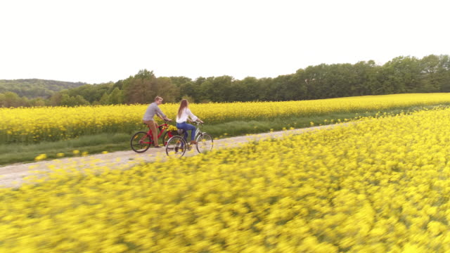 aerial loving couple holding hands as they cycling - canola stock videos and b-roll footage