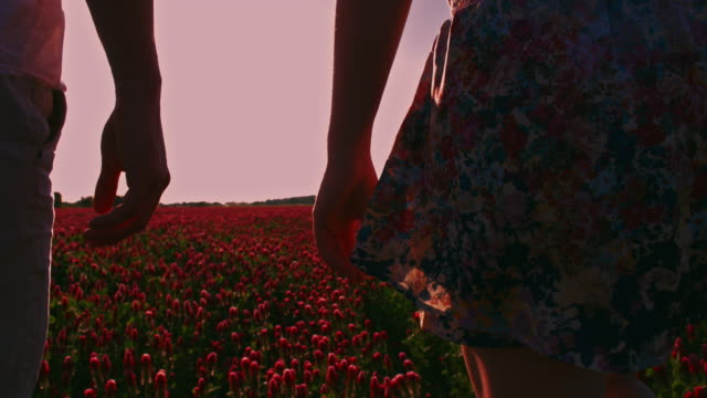 loving couple walking in the field of blooming clover - unrecognisable person stock videos & royalty-free footage