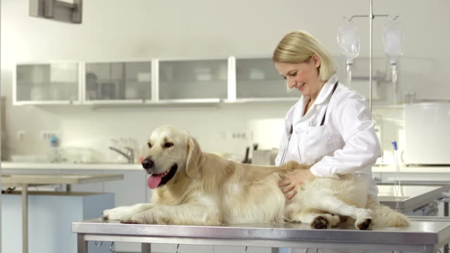loving female vet with a dog - examination table stock videos & royalty-free footage