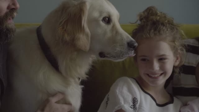 stockvideo's en b-roll-footage met loving parents and children with dogs sitting on sofa - klein