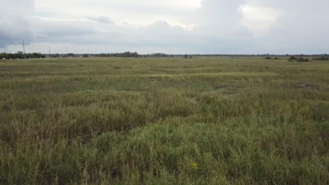 low aerial of savannah marsh - georgia stock-videos und b-roll-filmmaterial