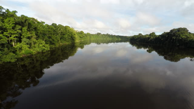 low aerial over amazon river & rainforest - wildnis stock-videos und b-roll-filmmaterial