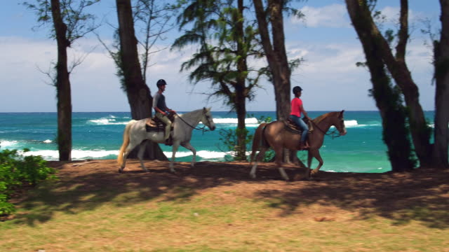 low aerial shot of couple taking guided horseback ride along the ocean - turtle bay hawaii stock videos & royalty-free footage