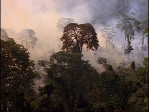 low aerial smoke from forest fire in jungle / brazil - amazon rainforest stock videos & royalty-free footage