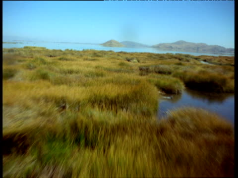 low aerial track over marsh and lake with waterfowl - seicht stock-videos und b-roll-filmmaterial