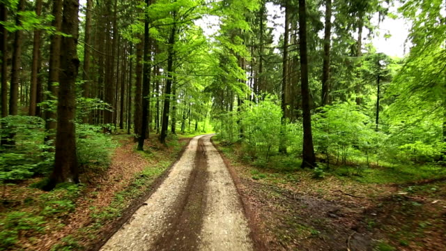 low aerial tracking shot of a green forest - dirt road stock videos and b-roll footage
