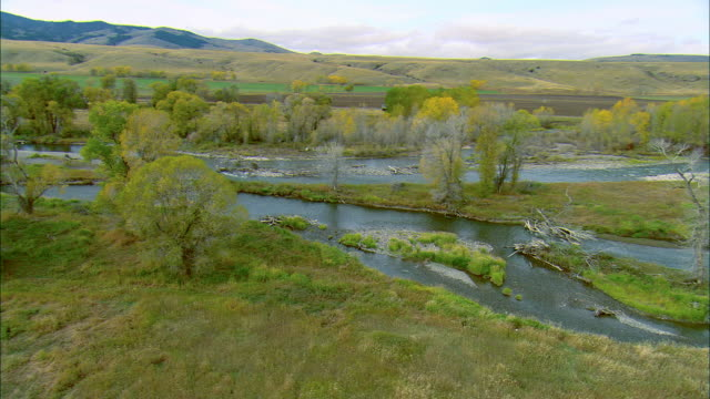 vidéos et rushes de low altitude aerial of deer crossing the gallatin river near bozeman, mt as a bald eagle enters frame and leaves - bozeman