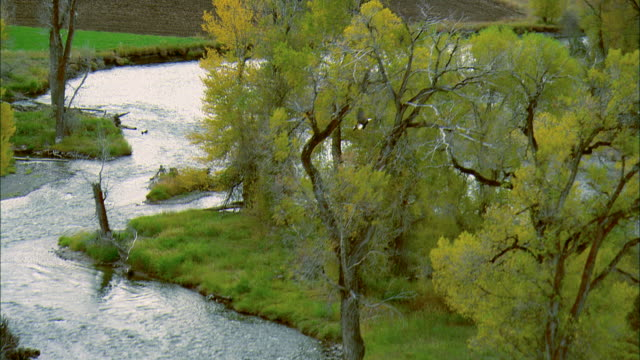 vídeos de stock, filmes e b-roll de low altitude aerial shot of a bald eagle flying over the gallatin river near bozeman, mt then landing in a tree - bozeman
