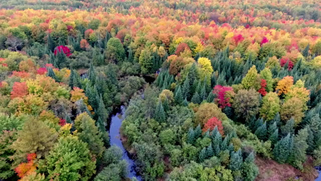 Low altitude aerial view of wooded area with fall colors