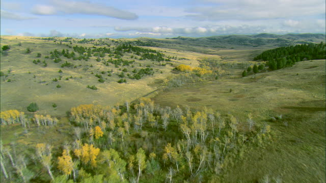 vidéos et rushes de low altitude flight over autumn apsen trees in rolling foothills outside of bozeman, mt - bozeman