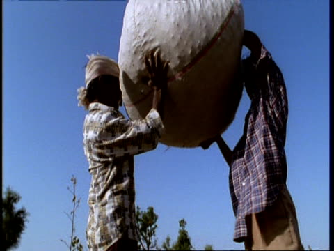 vídeos de stock, filmes e b-roll de ms low angle, 2 gujarat, indian men lift large sack of cotton on to head and carry it away, gujarat, india - levantando