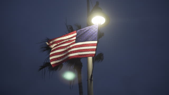 Low angle, American flag in front of palm tree