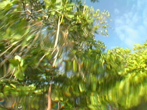 low angle arty shot of mangrove roots - bimini stock videos & royalty-free footage