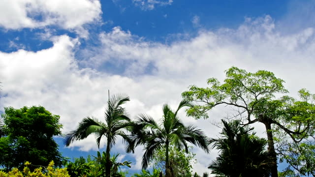 a low angle background shot of trees and blue sky - overhead projector stock videos & royalty-free footage
