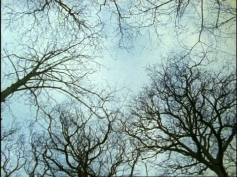 stockvideo's en b-roll-footage met ms low angle, bare tree falls to camera, uk - bare tree