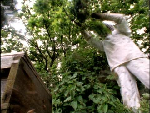 MS Low angle, Beekeeper knocks swarm of Honey Bees (Apis mellifera) to ground, bees crawl on camera, England
