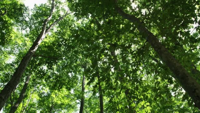 low angle, bijin bayashi forest in japan - satoyama scenery stock videos & royalty-free footage