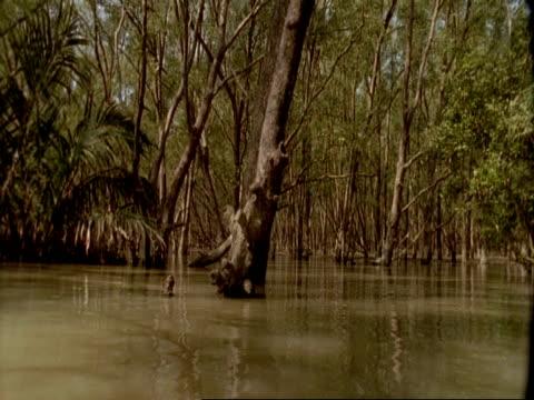 vídeos de stock, filmes e b-roll de mwa low angle pov of boat moving through mangrove swamp, sunderbans, india - pântano