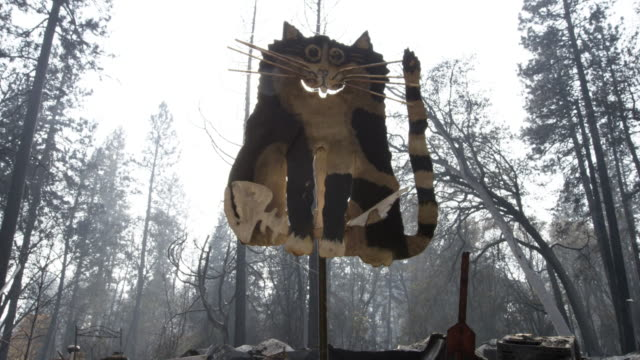 low angle, burned cat sign in california wildfire - ultra high definition television stock videos & royalty-free footage