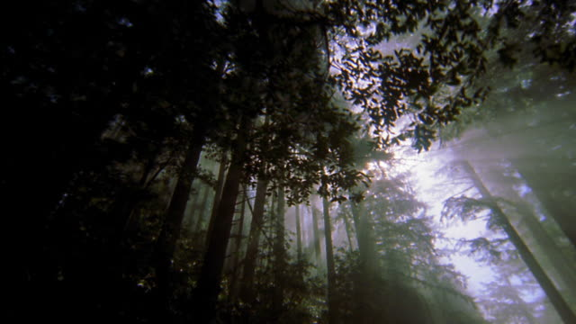 low angle car point of view driving through forest with sunlight shining through trees / redwood national park - redwood tree stock videos and b-roll footage