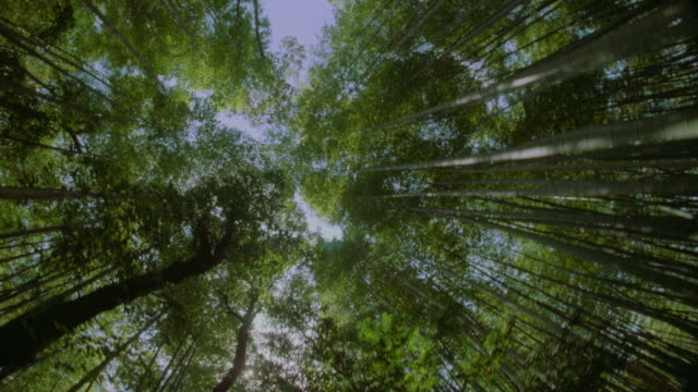 vídeos y material grabado en eventos de stock de low angle car point of view of treetops and sky in bamboo forest / kyoto / fish-eye lens - bamboo plant