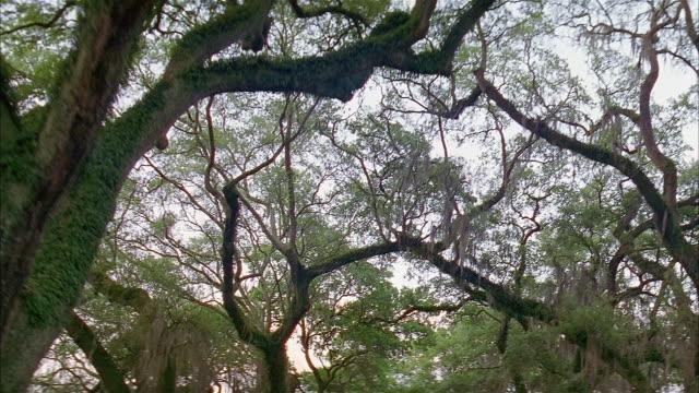 vídeos de stock, filmes e b-roll de low angle car point of view trees lining street - 50 segundos ou mais