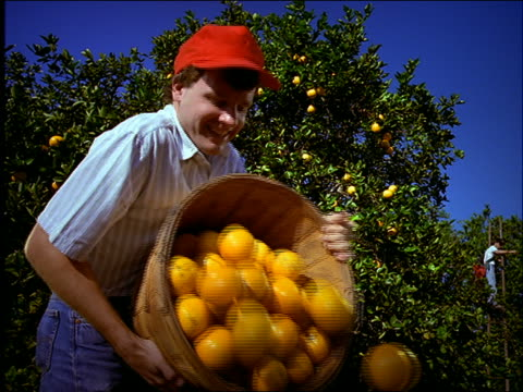 low angle close up of man pouring oranges from basket - cinematografi bildbanksvideor och videomaterial från bakom kulisserna