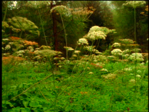 stockvideo's en b-roll-footage met low angle close up walking point of view thru field of white flowers in forest - laag camerastandpunt