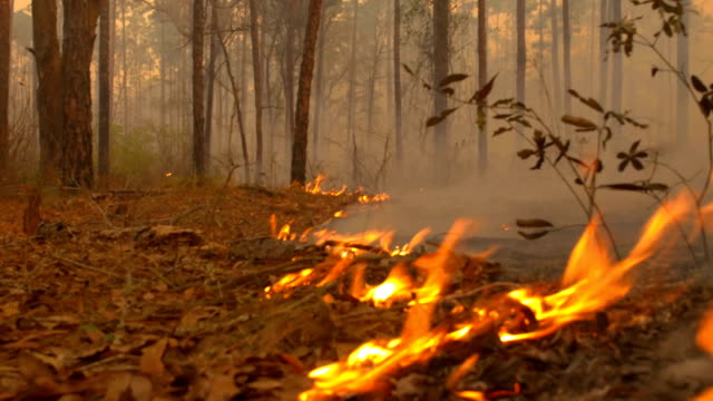 vídeos de stock e filmes b-roll de low angle, close view of of flame front moving through forest floor - fogo