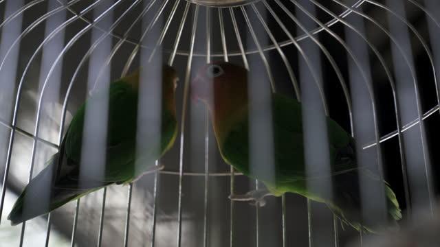 low angle close-up of birds in birdcage - suzhou, china - utfällda vingar bildbanksvideor och videomaterial från bakom kulisserna