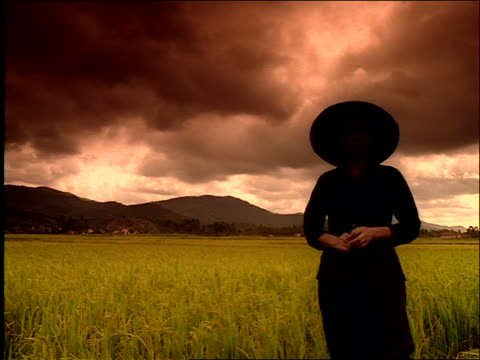 low angle dolly shot past woman standing in field / vietnam / filter - sparklondon stock videos and b-roll footage