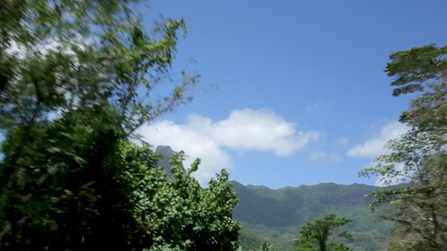 low angle, driving under tahiti mountains - franska polynesien bildbanksvideor och videomaterial från bakom kulisserna