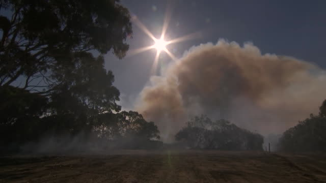 low angle establishing shot looking up at the sun and a cloud of smoke in australia. - environment or natural disaster or climate change or earthquake or hurricane or extreme weather or oil spill or volcano or tornado or flooding stock videos & royalty-free footage