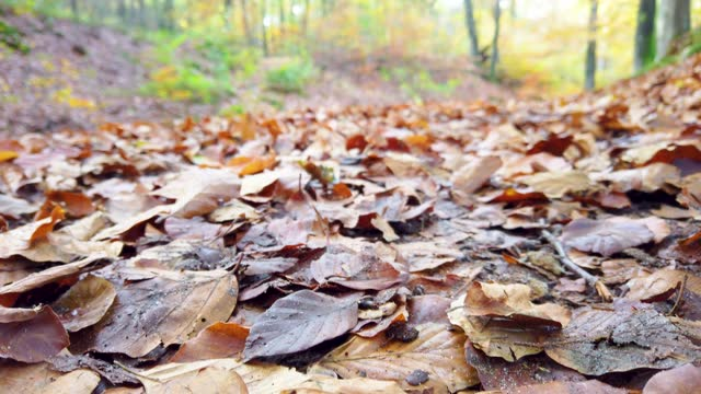 low angle footage of autumn leaves in the forest - low angle view stock videos & royalty-free footage