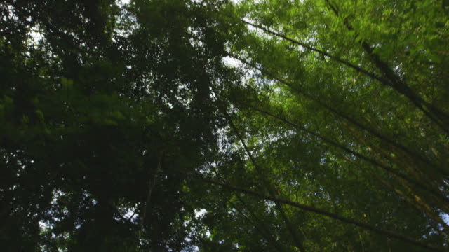 low angle from boat on river of trees in costa rican jungle - tree canopy stock videos and b-roll footage