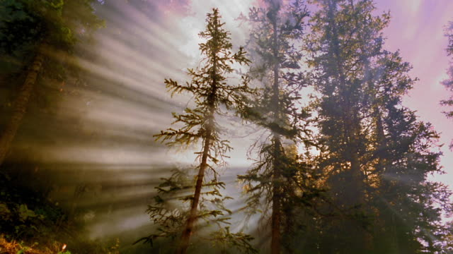 vídeos de stock, filmes e b-roll de low angle god rays shining through misty pine tree forest / aspen, colorado - forma da água