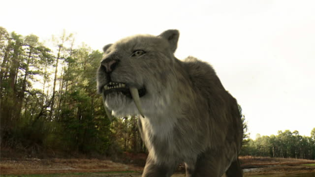 Low Angle hand-held - Large fangs protrude from the mouth of a prehistoric feline in a computer-generated animation. / Los Angeles, California, USA