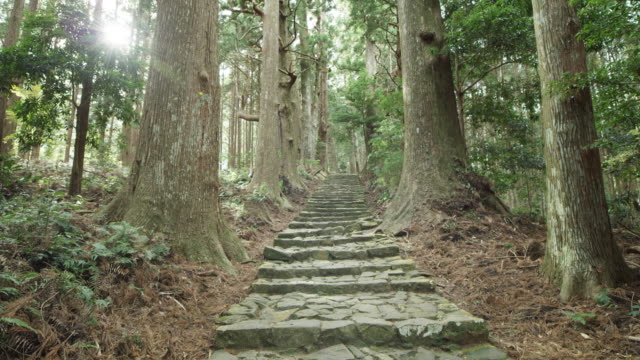 low angle, kumano kodo in japan - satoyama scenery stock videos and b-roll footage