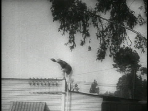 B/W 1914 low angle long shot boxer (Fatty Arbuckle) holding guns running on rooftop / feature