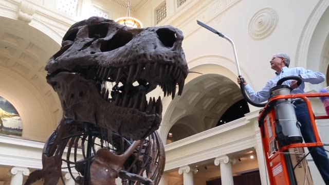 low angle long shot geologist bill simpson cleans sue a 67millionyearold tyrannosaurus rex on display at the field museum on november 12 2013 in... - geologist stock videos & royalty-free footage