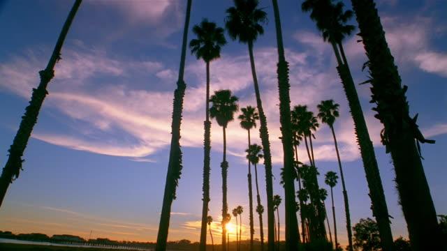 vídeos y material grabado en eventos de stock de low angle long shot sun setting behind palm trees - santa bárbara