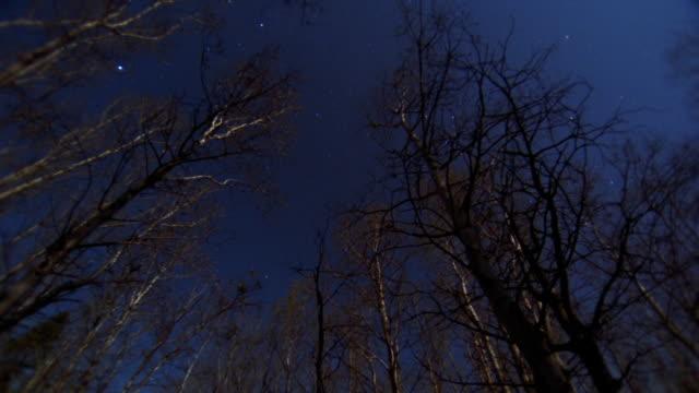 low angle long shot time lapse night sky through leafless trees / Jasper National Park, Alberta, Canada
