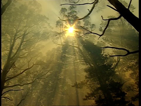 low angle, looking through tree canopy to starburst sun, through thick smoke - bush stock videos & royalty-free footage