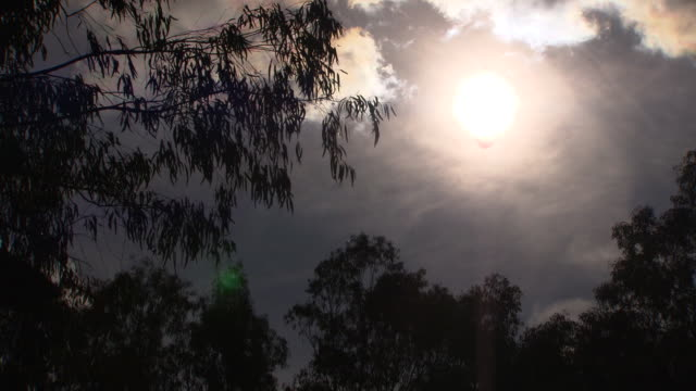 low angle looking up at sun glare shining through drifting clouds - seen past gum tree branches and leaves blowing in the wind - bush stock videos & royalty-free footage