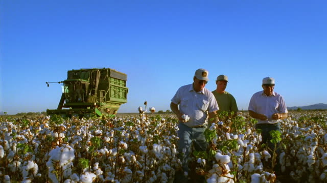 Low angle medium shot dolly shot three farmers walking through cotton field and playing with each other's hats / Thatcher, Arizona