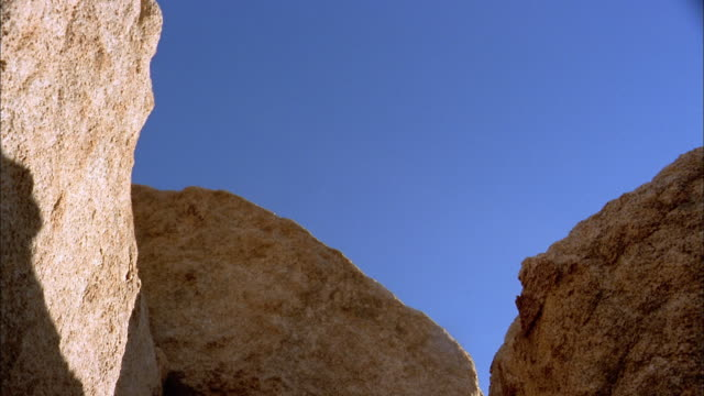 low angle medium shot man jumping onto boulder / joshua tree national park / california - joshua tree national park stock videos & royalty-free footage