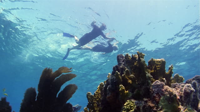Low angle medium shot mature couple snorkeling with coral in foreground